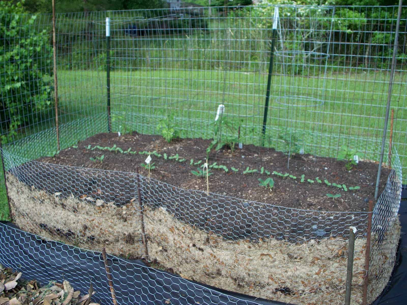 'Lasagna Gardening': Here's How To Grow Organic Vegetables Easily (Even Without A Garden!)