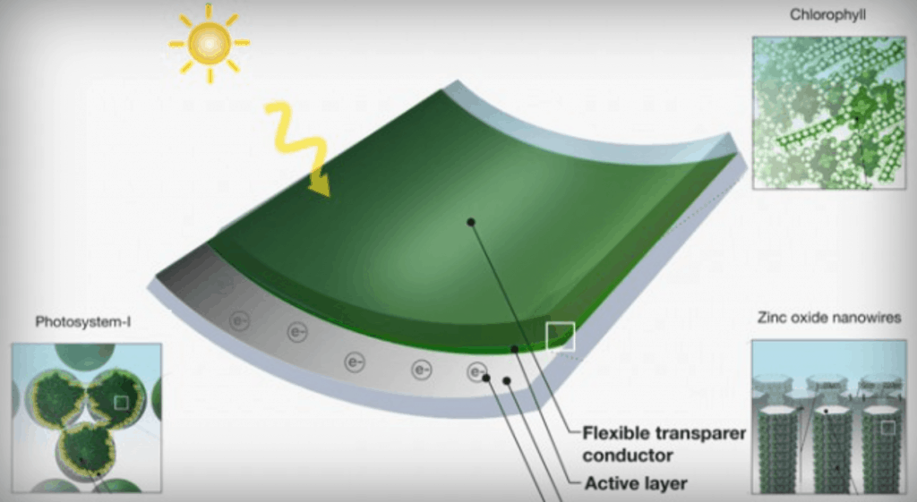 Mit Researcher Creates Solar Panels From Grass Clippings