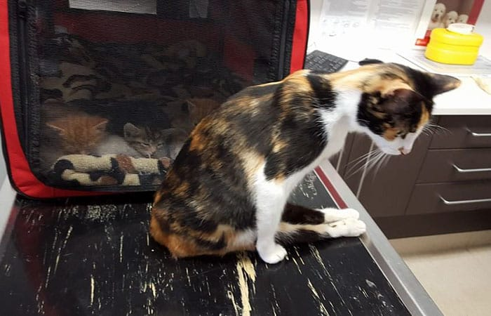 Abused Cat Fights Paralysis To Be Reunited With Her Kittens [Watch]