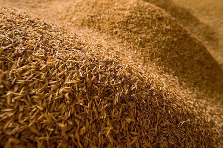 India's Organic Rice Revolution Proves GMOs Are Unnecessary
