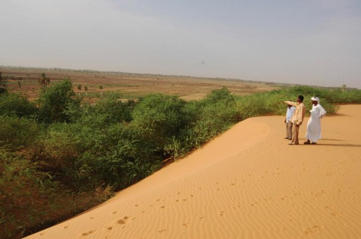 """Résultat de recherche d'images pour """"forest in desert"""""""