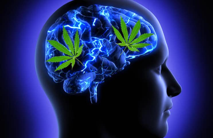 Harvard Study: Smoking Cannabis Actually Improves Brain Function