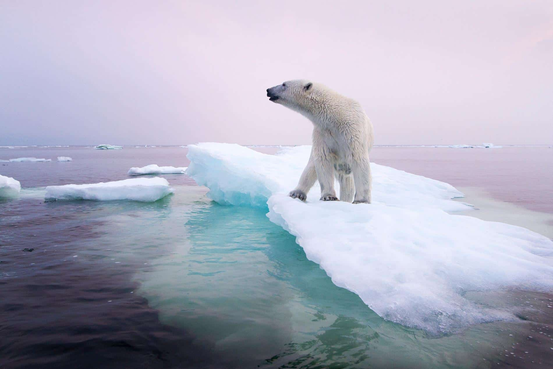 Animals: The Innocent Victims Of Climate Change