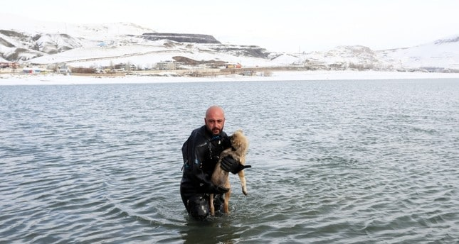 Brave Police Officer Smashes Through Frozen Ice To Save A Puppy In The Middle Of A Freezing Lake