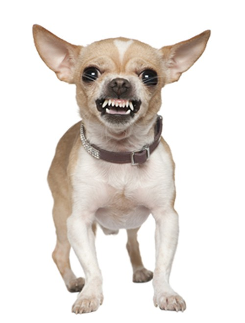 30 Most Dangerous Dog Breeds - Page 13 of 31 - True Activist