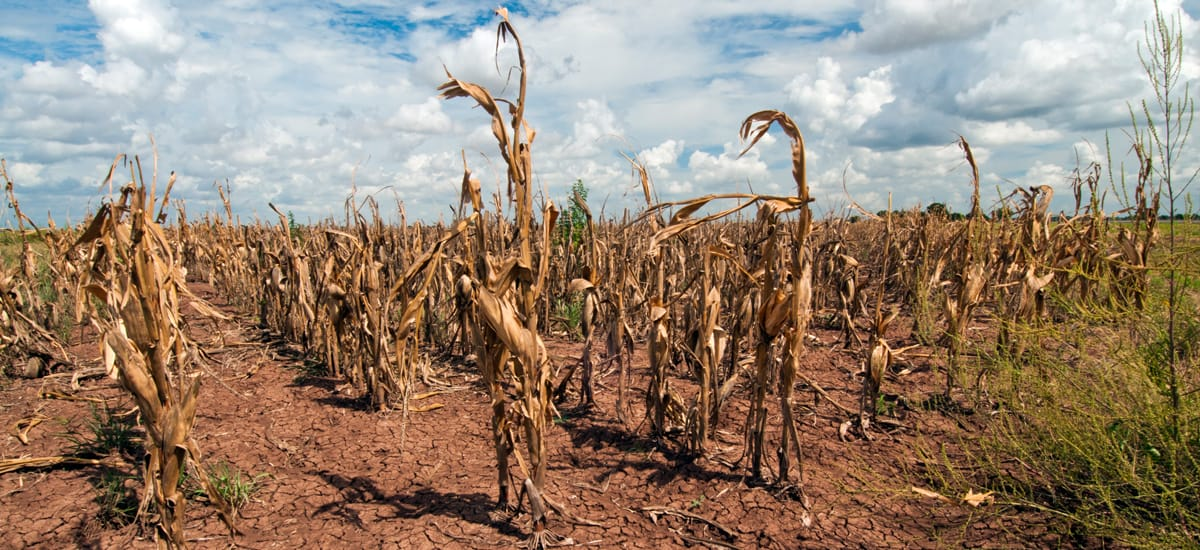 Human Activity Worsens Risk Of Drought And They Are About To Increase, Study Shows