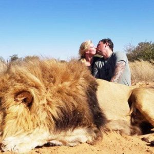 Couple Kiss For A Photo With Majestic Lion They Shot Dead On A Hunt In South Africa