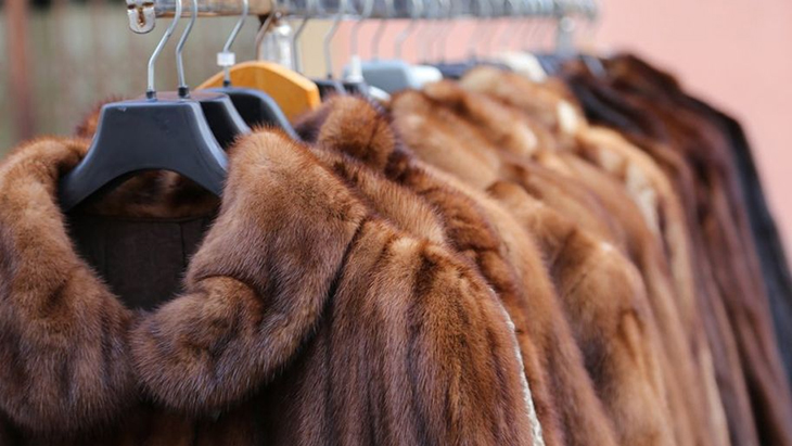 California Passes Law Banning Manufacturing And Sale Of Wild Animal Fur Products, Becoming The First State To Do So