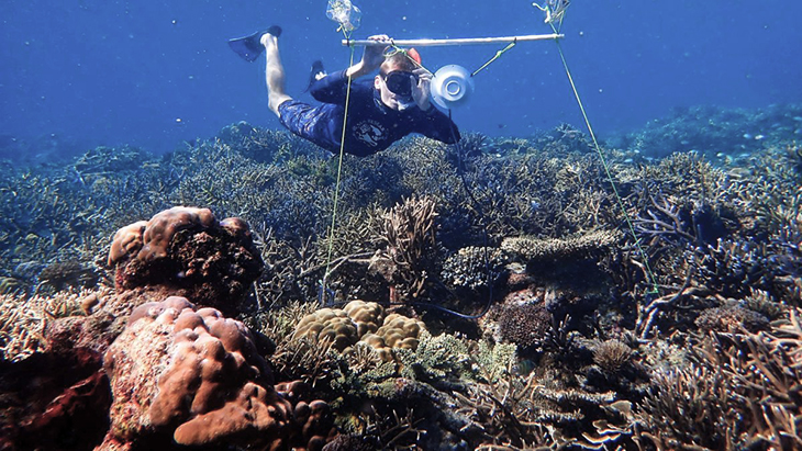 Marine Biologists Now Play Recordings Underwater To Attract Fish In Dead Coral Patches To Clean And Restore These Areas Back To Life