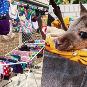 Thousands Of People From All Over The World Volunteer And Make Mittens, Pouches And Nests For Burned And Injured Animals In The Australian Bushfires